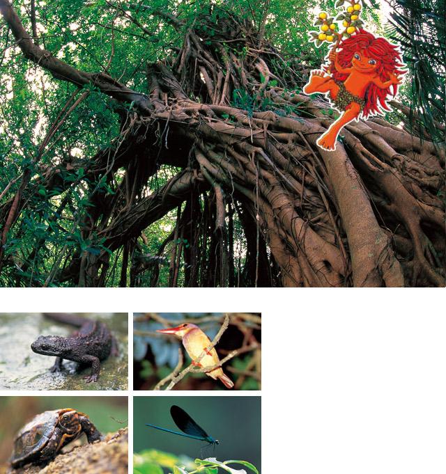 「ぶながや」という木の精霊が住む大宜味村の森・川