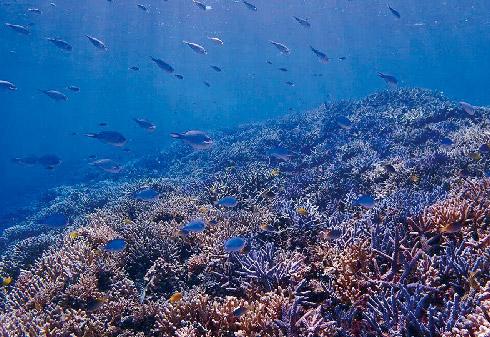 美ら海体験