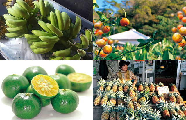 シークヮーサー・島野菜・農業体験